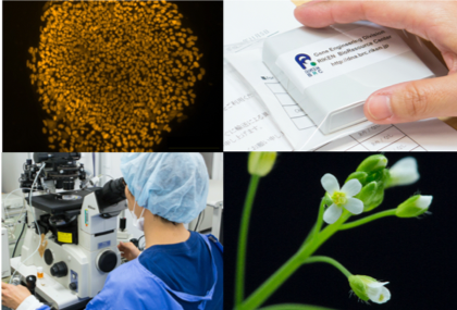 RIKEN BRC collects, preserves and distributes five important bioresources: experimental mouse strains, Arabidopsis thaliana and other laboratory plants, cultured cell lines of human and animal origin, microorganisms, genetic materials of human, animal and microbe origin.