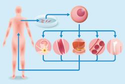 iPS細胞の画像
