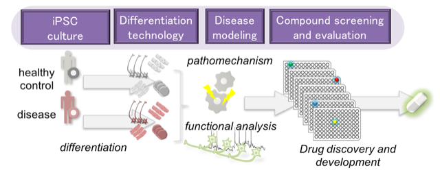 iPSC culture Differentiation technology Disease modeling Compound screening and evaluation pathomechanism healthy control disease functional analysis differentiation Drug discovery and development